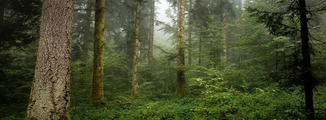 sous bois troncs et feuillage