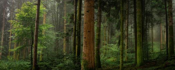 Dans un sous bois tronc de sapin avec et sans mousse