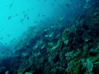 Mur de poissons