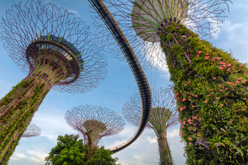 Supertrees at Gardens by the Bay -Singapore