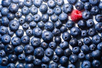Blueberry Field 3