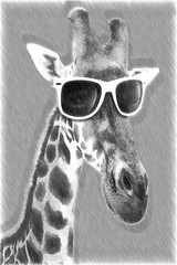 Portrait of a giraffe with hipster sunglasses. Illustration in draw