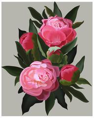 Realistic pink peonies. Vector flower illustration