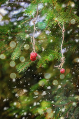 Christmas card with strawberries on a spruce branch.