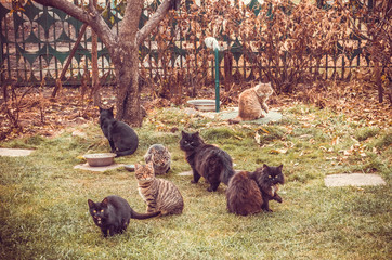 Дружная кошачья семья. Домашний приют для беспородный котов