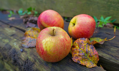 Apples fallen from an apple tree in autumn