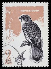 """USSR - CIRCA 1965: Postage stamp """"Old World kestrel"""""""