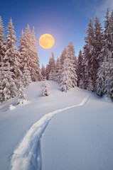 Wall Mural - Winter forest