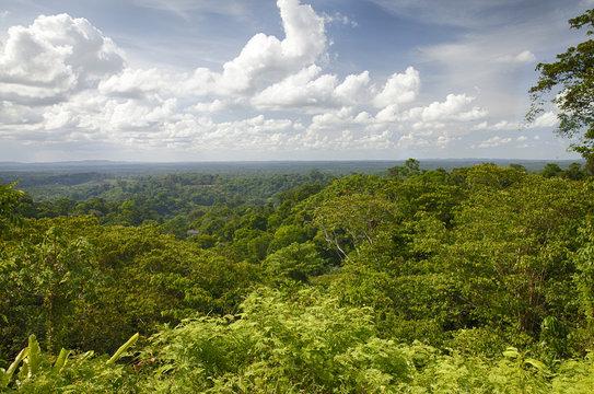 Forêt de Guyane-Amazonie