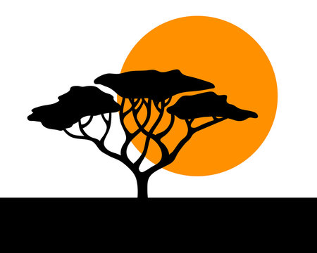 Vector african acacia background