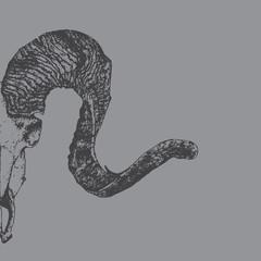 ram's skull sketch