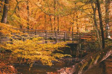 Photo sur Aluminium Automne Brücke über den Bach im Herbstwald