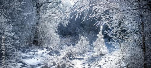 beleuchteter weihnachtsbaum in verschneitem winterwald. Black Bedroom Furniture Sets. Home Design Ideas
