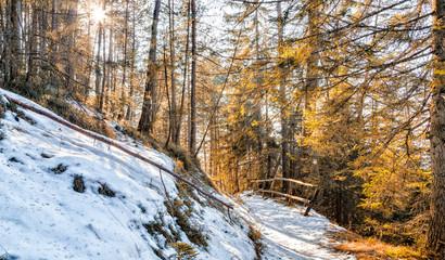 Walk path in alpine forest on Dolomites mountains