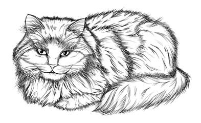Foto op Canvas Hand getrokken schets van dieren lying cat, black and white pencil drawing
