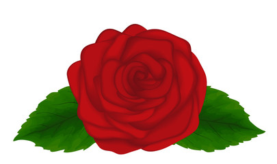 Beautiful red rose with green leaves isolated on white background. Great design element for cards and decorations