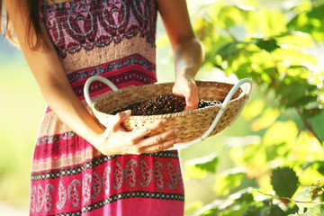 Basket with coffee beans in females hands