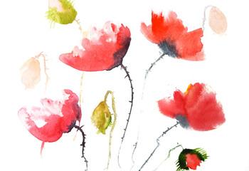 Red poppy flowers, watercolor illustrator