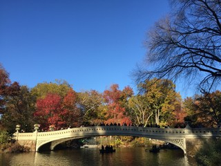 Central Park i n the Autumn, NYC