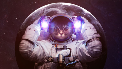 Wall Mural - Beautiful cat in outer space. Elements of this image furnished by NASA