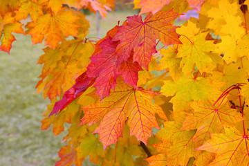 Brunch with yellow and red leaves