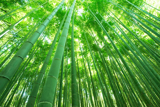 日本の風景・竹林・京都