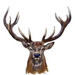 deer head digital painting/ deer head in front