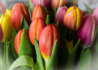 Bouquet of colorful tulips in a light vignette
