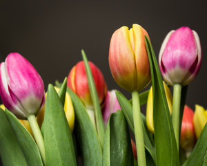 Bouquet of colored tulips on a black background