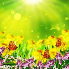 Summer. Flowers and butterflies