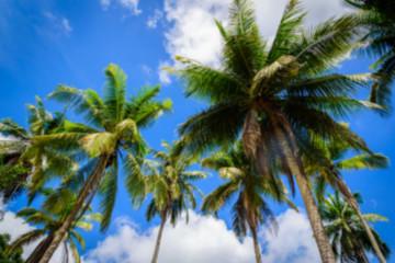 Blur Coconut palm tree on blue sky background