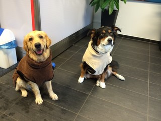 Hunde im Bademantel