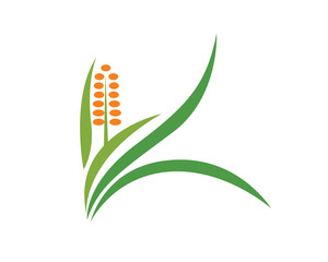 Food Plantation