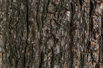 old textured tree bark