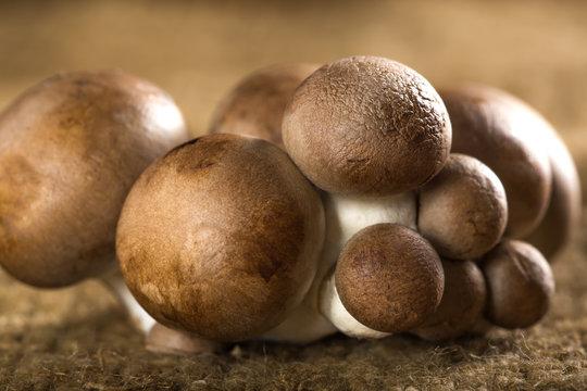 Brown Baby Bella Mushrooms