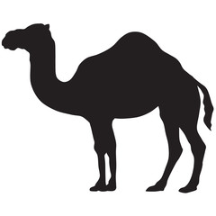 camel silhouette-vector