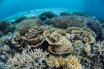 Fragile Coral Reef