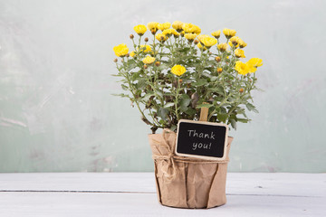 Thank you - beautiful  flowers in pot with message card