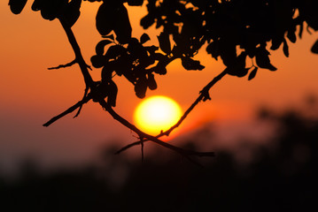 Sun got stuck in the branches at sunset. Cyprus