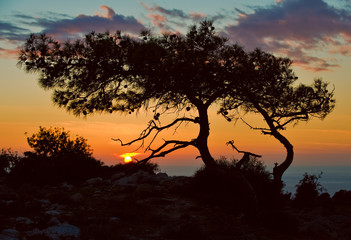 Fantastic sunset with the silhouette of a tree. Cyprus