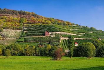 Saale Unstrut Weinberge - Saale Unstrut vineyards 06