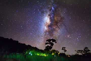 Silhouette of Tree and Milky Way, Long exposure photograph,with
