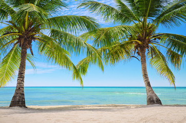 Palm trees on the background of a beautiful carribean sea