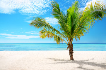 Exotic beach and coconut palm tree Saona Island, Dominican Repub