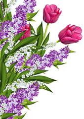tulips flowers isolated on white background