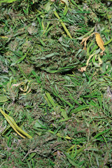 Marijuana Leaves and Hemp Seeds