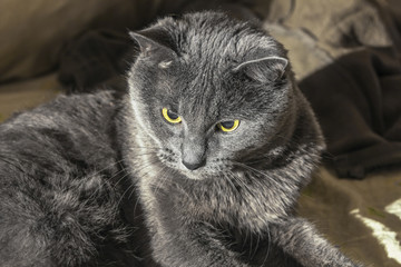 Centered grey cat