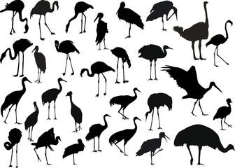 twenty nine birds collection on white