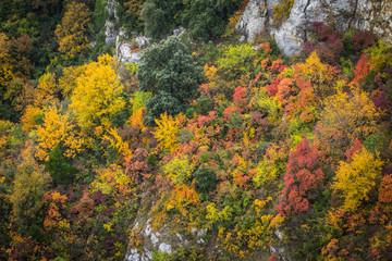 Autumn trees over rocky cliffs