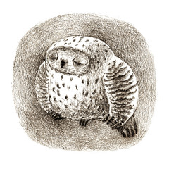 Great Grey Owl Sleeping In a Hollow